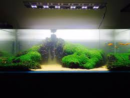 Reef Aquascape Designs Inspiring Reef Aquarium Aquascape Designs Images Ideas Surripui Net