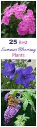 Plants Blooming Summer Blooming Plants 25 Favorites For Long Season Color