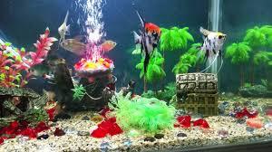 aquarium decorations decorating your aquarium