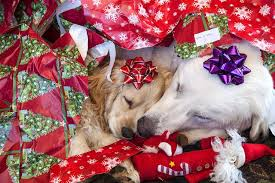two puppies pooped from opening presents jim zuckerman