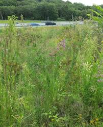 prairie oak ecosystems of the native grass and wildflower seeding q u0026 a with the experts