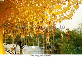 Wish Tree Wish Tree Stock Photos U0026 Wish Tree Stock Images Alamy