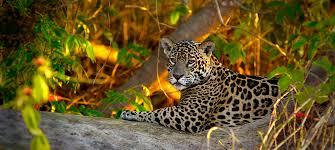 Map Pics Meet Jaguar Stationary Photo 4b Jpg Itok U003d9o1gntur