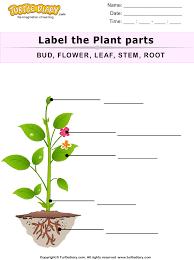 parts of plants worksheets worksheets