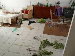 Comment Fabriquer Une Niche Pour Chien Facilement Conseils Pour Laisser Son Chien Seul à La Maison Vetocourtiade