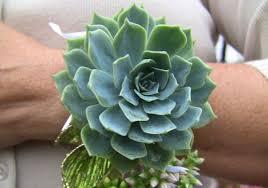corsages near me succulent wedding bouquets centerpieces more succulents