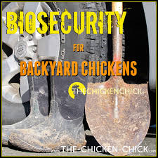 the chicken biosecurity for backyard chickens