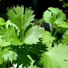 herbe cuisine 3 fines herbes indispensables en cuisine my jardin my