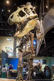 free museum weekend at perot museum of nature science hey jpei