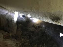 alameda county firefighters rescue kitten stuck in the wall of