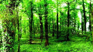 Forest Green by Forest Images Hd Wallpapers Live Hd Wallpaper Hq Pictures