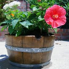 Half Barrel Planters by 82 Best Wine Barrel Ideas Images On Pinterest Wine Barrels Wine