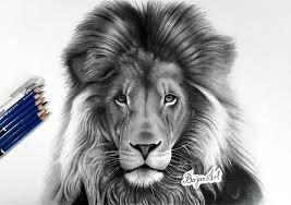lion drawing bajan art deviantart