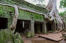 trees in ta prohm angkor wat stock photo image 26942760