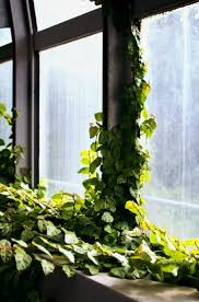 free images architecture plant window arch green backyard