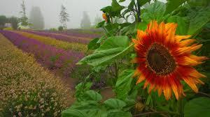sun flower garden 6 best garden design ideas landscaping