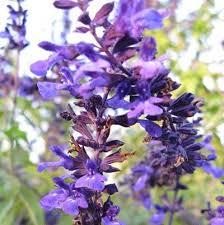 170 best annuals images on pinterest flower gardening garden