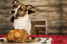 thanksgiving safety for dogs tips foods to avoid