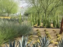 native desert plants i love the geometric form of these desert plants garden