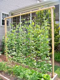 garden idea pea trellis privacy fence brd roof project