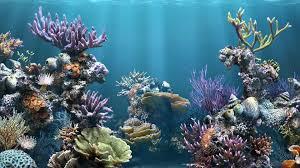 fish tank backgrounds download pixelstalk net