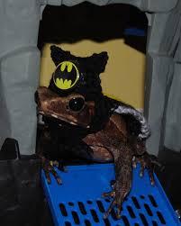 Bearded Halloween Costume Wow Tiny Pet Halloween Costume Batman Hat Cape
