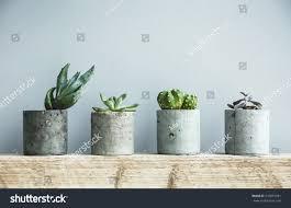 succulents diy concrete pot scandinavian room stock photo