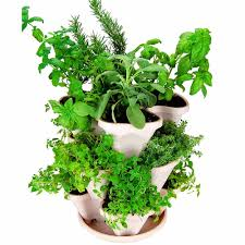 herbs herb plants and herbal products sold direct by the producer
