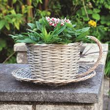 kingfisher coffee cup planter available at this is it stores uk
