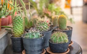 cactus garden ideas garden design pictures