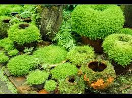 How To Plant A Garden In Your Backyard How To Grow Moss Garden Indoor Youtube
