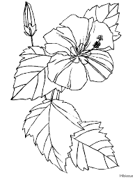 coloring pictures of hibiscus flowers hibiscus flowers coloring pages coloring book