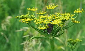 native iowa plants iowa mowing law for roadsides black hawk county ia