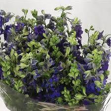 Wholesale Flowers Delphinium Wholesale Flowers Uk Wedding Flowers Triangle Nursery