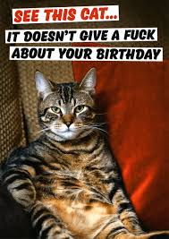 rude card cat doesn u0027t give f ck about your birthday comedy