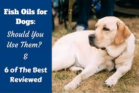 best fish oil supplements for dogs for joint and arthritis care