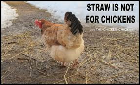 the chicken reasons straw does not belong in chicken coops
