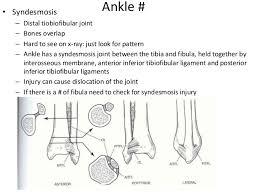 Posterior Inferior Tibiofibular Ligament Common Fractures