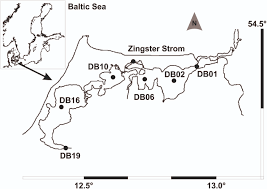 frontiers identification of cyanobacteria in a eutrophic coastal