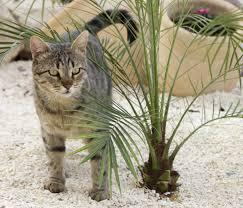 Backyard Soil Free Picture Nature Cat Backyard Kitten Palm Tree Soil
