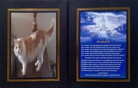 pet prayer allanimalsaregodscreations we believe pet prayer photos