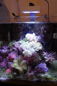 led reef lighting reviews ai nano led review good things can exist in small packages news