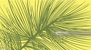pine tree needles vector getty images