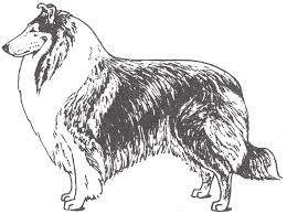 collie page
