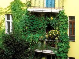 garten balkon sichtschutz für balkon und garten 4