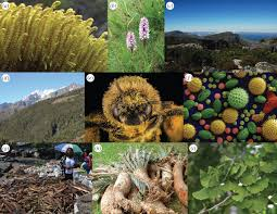 a species of native plant dna barcoding plants philosophical transactions of the royal