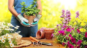 gardening for beginners basic tips you need for starting a garden