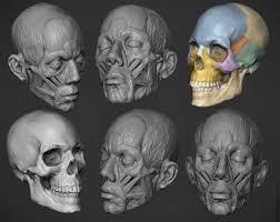 3d Head Anatomy My Zbrush Artworks Majid Esmaeili Page 7 Anatomy References