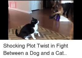 Cat Fight Meme - shocking plot twist in fight between a dog and a cat fight meme