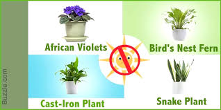 house plants that don t need light dress up your home with these indoor plants that dont need sunlight